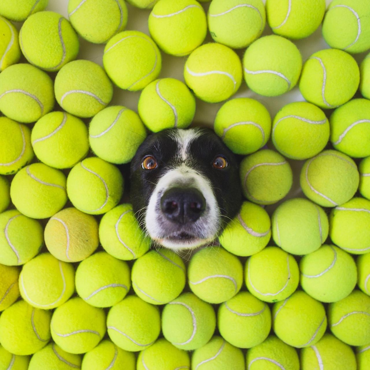 犬 ワンコを探す画像