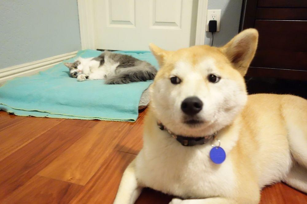 失った犬と奪った猫