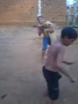 ブラジルは犬まで踊るらしい