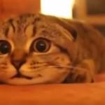 子猫にホラー映画を見せてみた