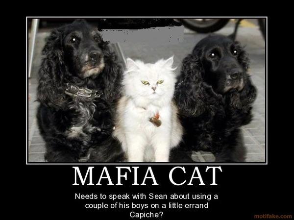 海外で日本の猫が極悪になっていた