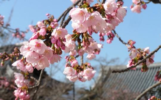 おしゃれでかわいい春のpc壁紙