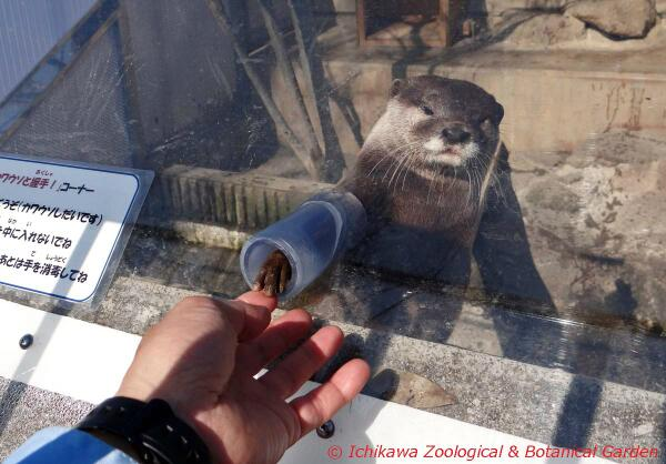 カワウソと握手が出来る動物園が出現!