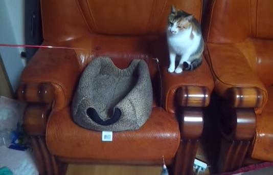 猫が猫を釣っててワロタ