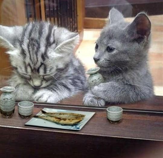猫のおもしろ画像集