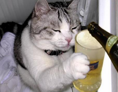 猫さん18