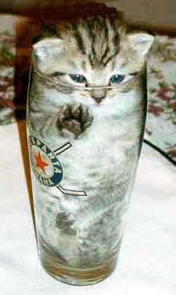 猫さん37