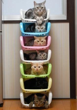 猫さん19