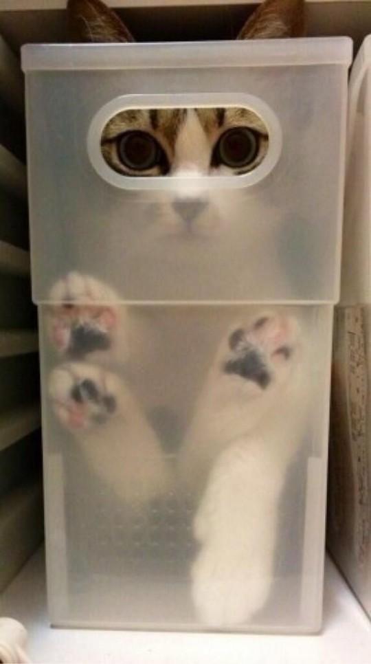 猫さん13