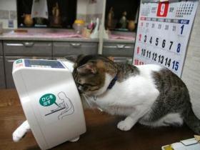 猫さん11