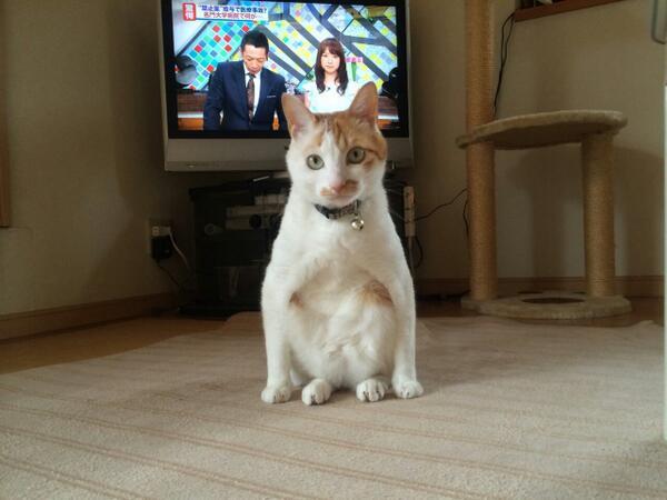 猫の座り方がカッコイイ