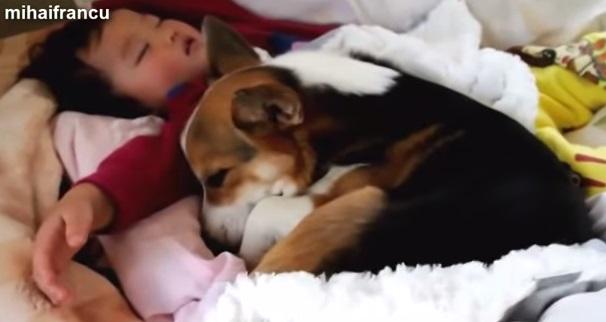 【癒し】動物と赤さんの仲良し動画