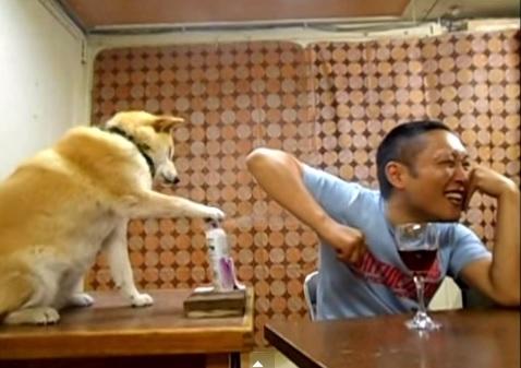 柴犬マリちゃんの動画が面白すぎるわwww