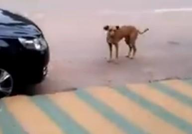 ブラジルでノリがいい犬が発見されるww