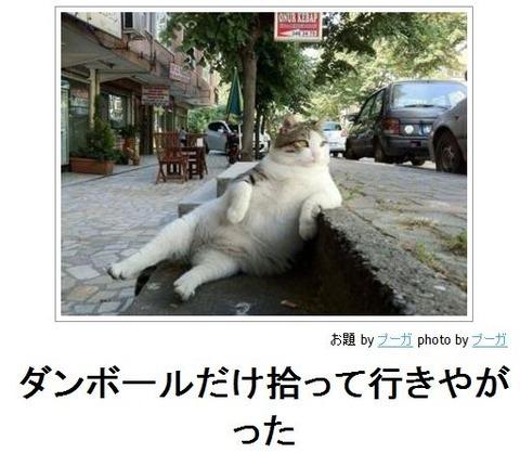 猫の出す「ゴロゴロ音」癒し効果がすごい。