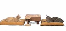ネコ将棋!