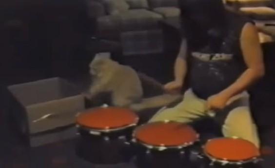 猫とセッションしてみた