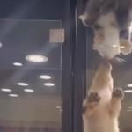 猫の隣のワンコケースに移動