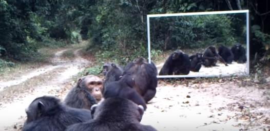 いろんな動物に鏡を見せてみた