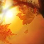 今年も美しい 落ち葉アートを集めてみた